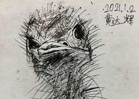 鸵鸟写生-儿童画创想B班-2021年1月2日◆秋季班◆新起点画苑-学生作品