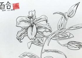 百合写生-主题绘画班-2021年10月16日◆秋季班◆新起点画苑-学