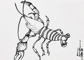 小龙虾写生-儿童画大师A班-2020年5月29日◆春季班◆新起点画苑